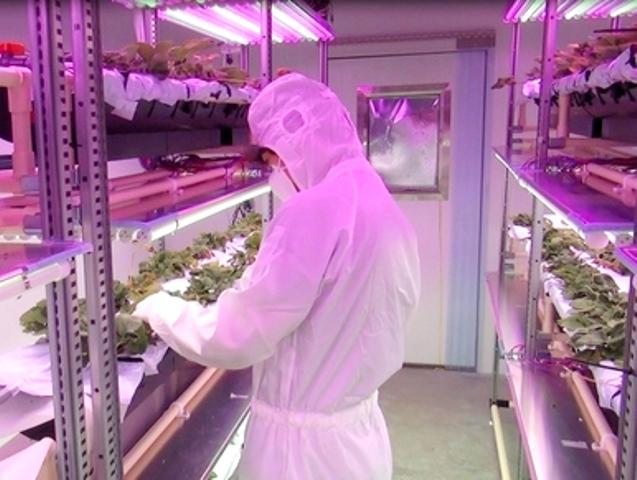 シャープが植物工場